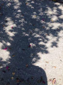 suneclipse2.jpg